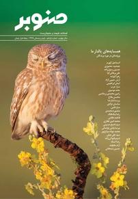 مجله فصلنامه صنوبر - شماره ۱۱