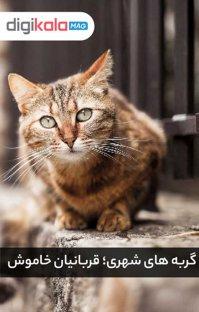 پادکست گربههای شهری؛ قربانيان خاموش