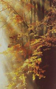 پادکست رادیو میکس بار - پاییز - قسمت پنجم