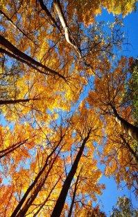 پادکست رادیو میکس بار - پاییز - قسمت سوم