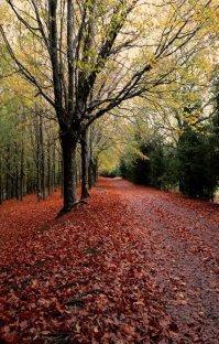 پادکست: رادیو میکس بار - پاییز - قسمت دوم (فصل هفدهم)