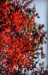 پادکست رادیو میکس بار - پاییز - قسمت اول